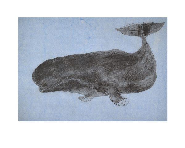04-Ancient Beluga