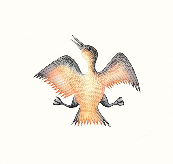 17-Jubilant Bird