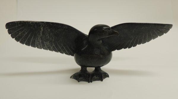 Bird Shaa P 43035