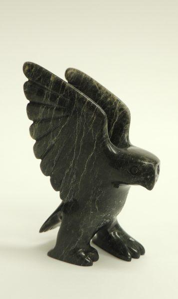 Owl Shar A 43031